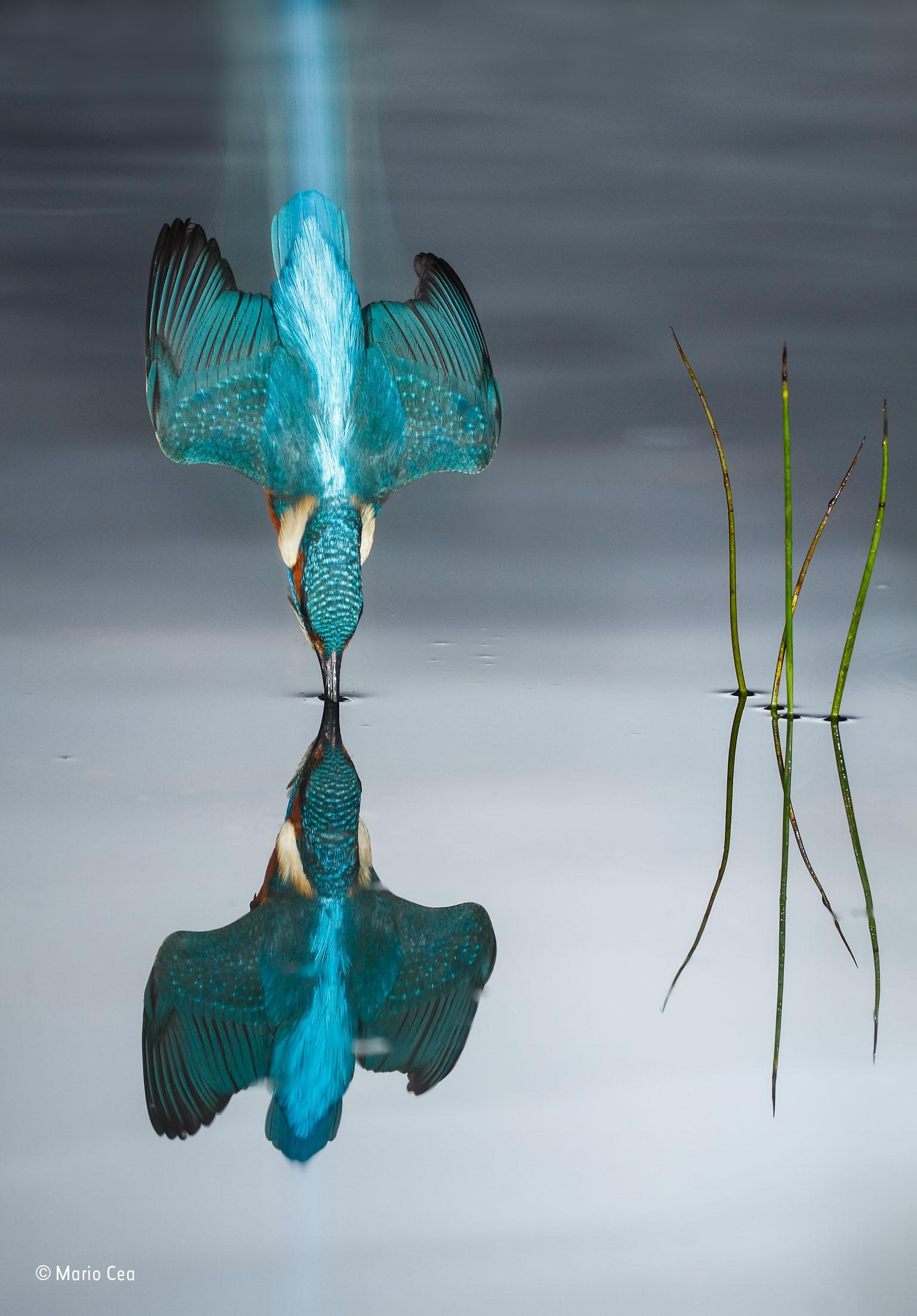 Kingfisher photo