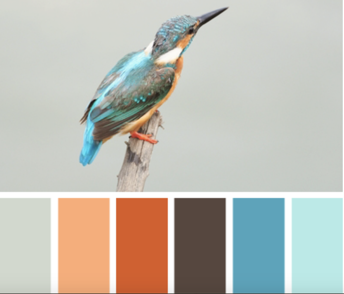 kingfisher color scheme