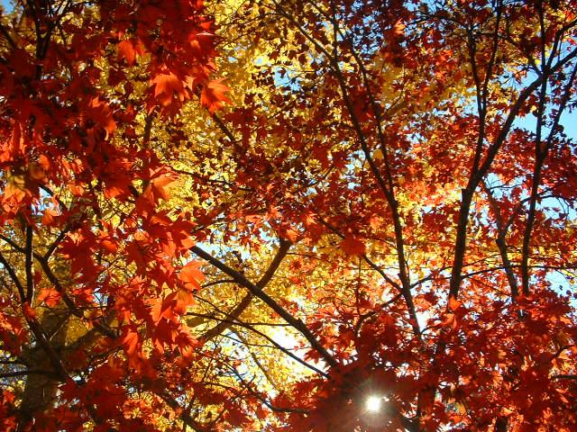 fall-at-ditman-lane-009.jpg