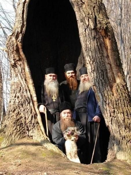 monks in tree